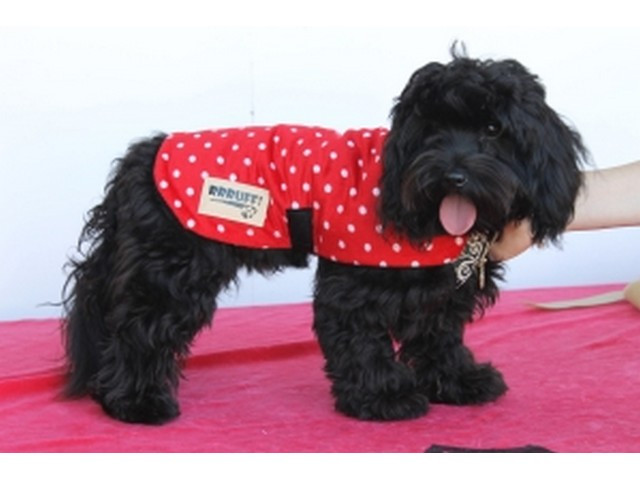 Minky Fleece Dog Coat – Red Polka Dot